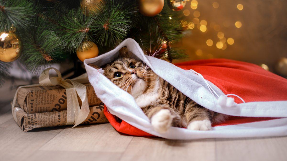 Unleash Your Pet's Holiday Joy