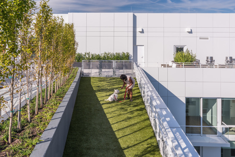 Rooftop dog and pet park