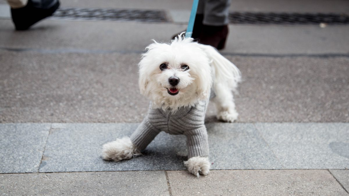 Life of (City) Pets