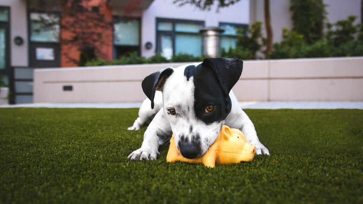 Play Nice: The Ultimate Guide to Dog Etiquette