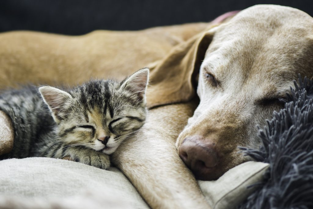 Dog and kitten sleeping