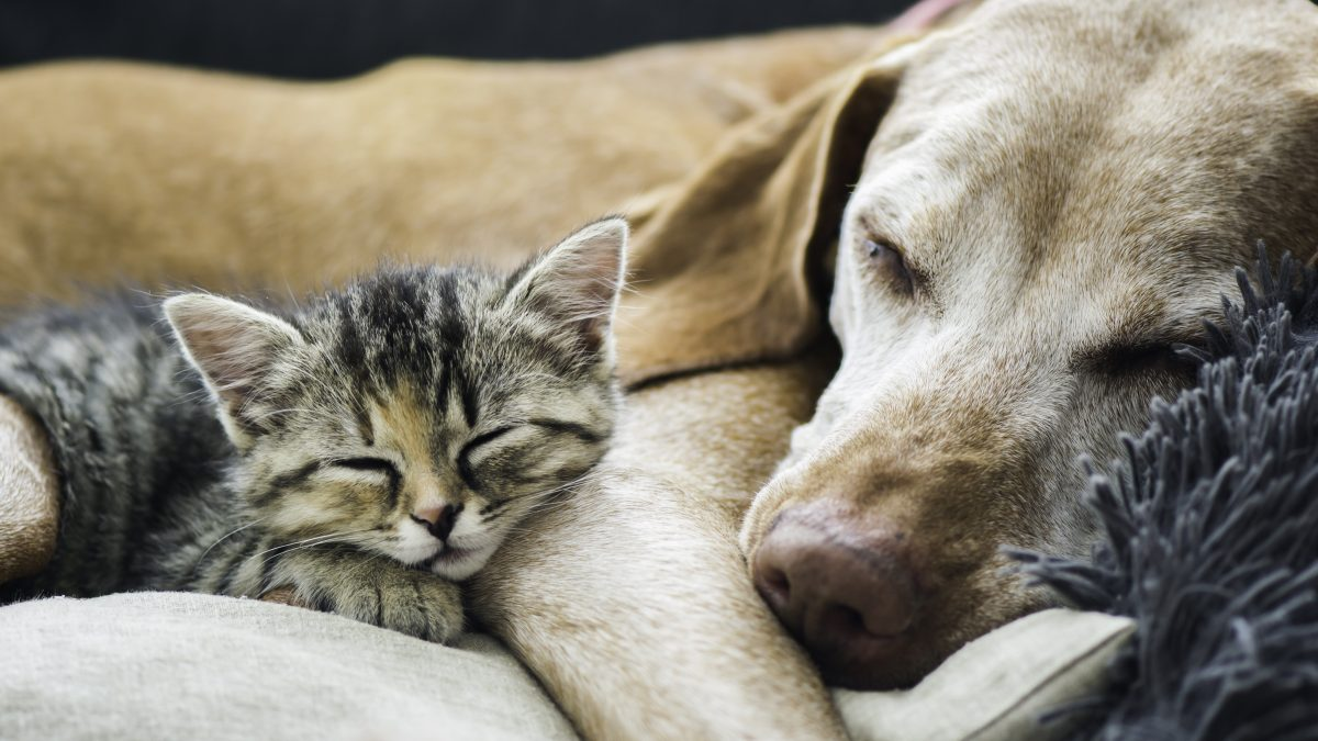 Why can't we be friends? Introducing cats & dogs