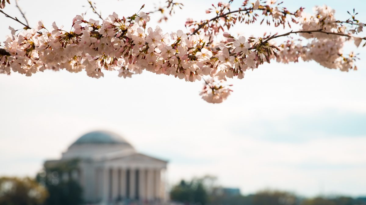 Spring Fling: DC Events You Don't Want to Miss