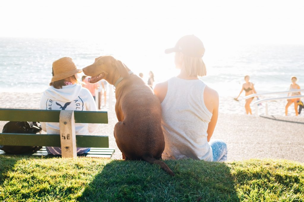 woman and pet at beach