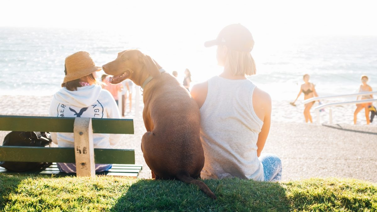 A Pet Owners Guide to Vacationing