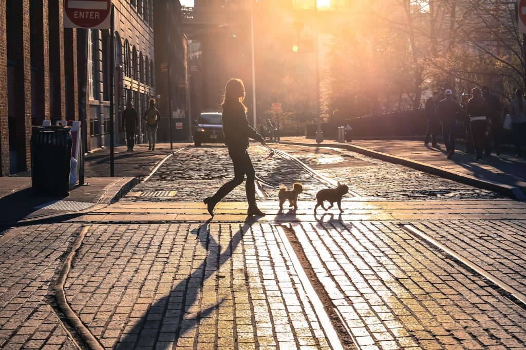 woman walking with dogs in Brooklyn, NY