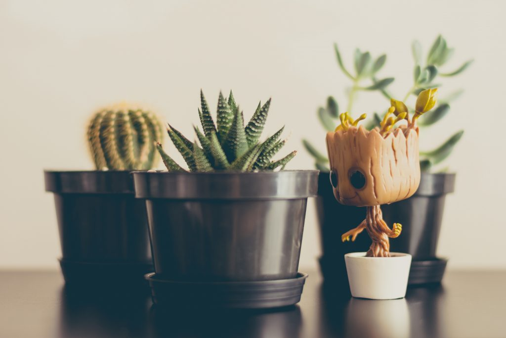 succulent plants with Groot figurine