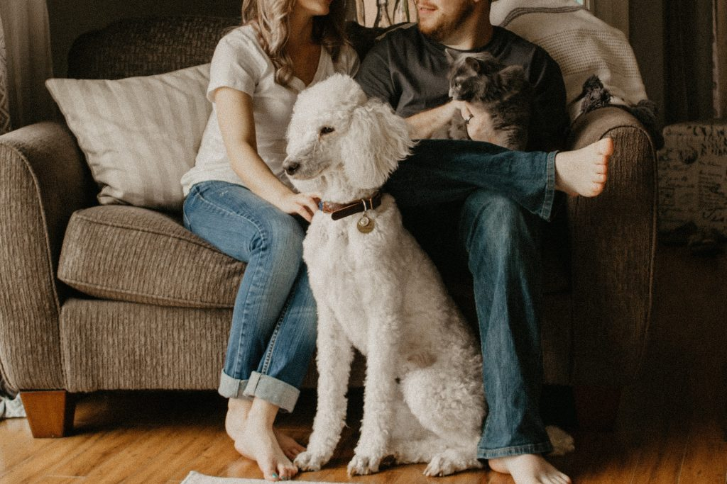 couple in sofa chair with cat and dog
