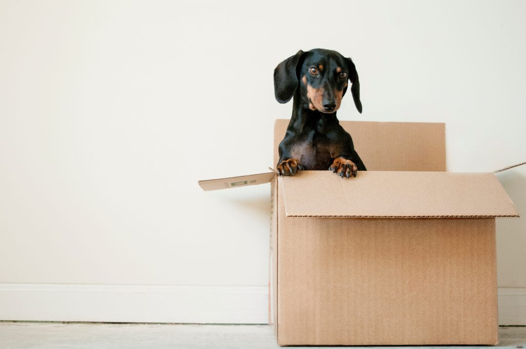 dog in cardboard moving box